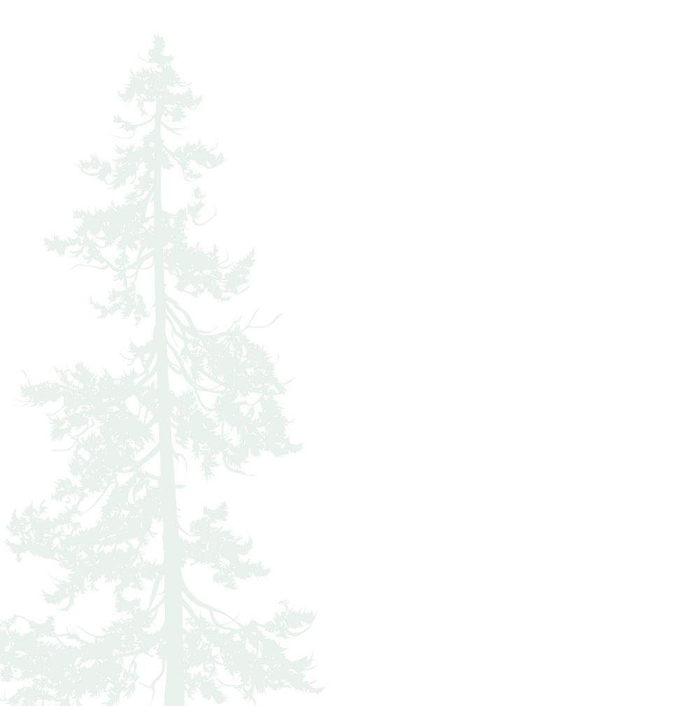 Tree%20Background-02-01_edited.png