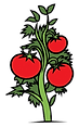 tomato-plant.png