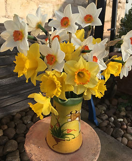 Sue's daffs in vase outsidepsd.jpg