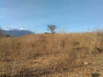 Zamboanguita_rawland.jpg