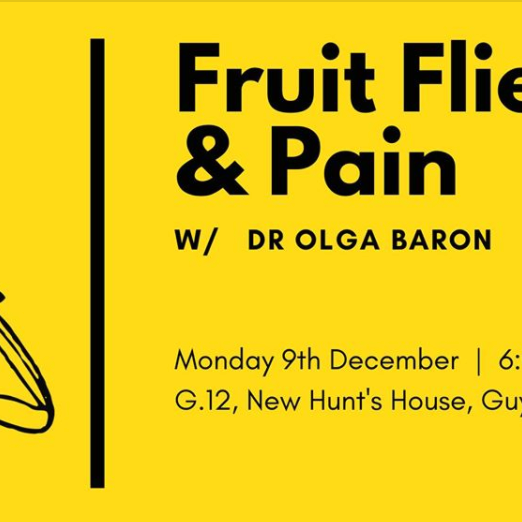 Fruit Flies & Pain