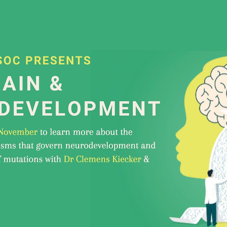 The Brain & Neurodevelopment
