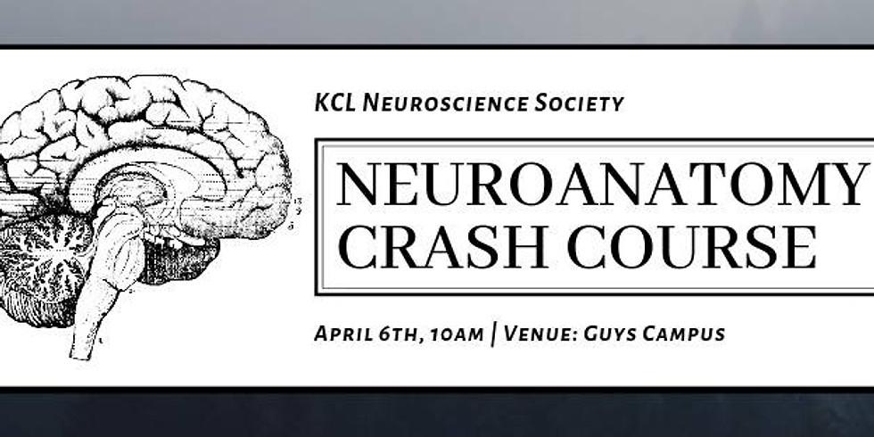 Neuroanatomy Revision Crash Course