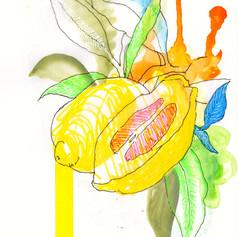 Chuck Carbia sketchbook lemons 2.jpeg