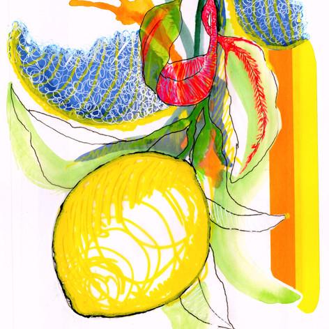 Chuck Carbia sketchbook lemons 3.jpeg