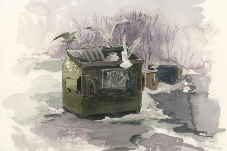 Seagulls and Trash