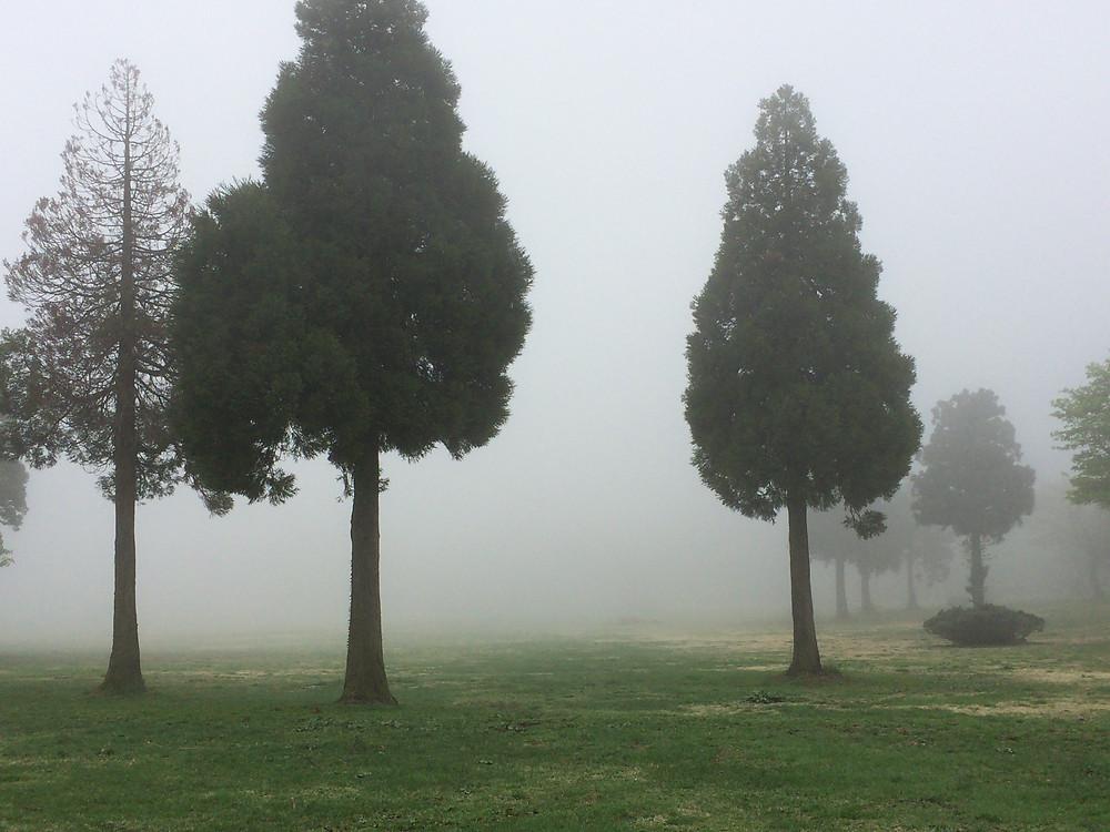 雨は降ってませんが、辺り一面深い霧が…