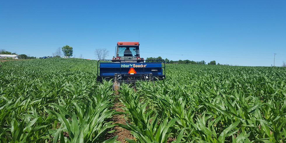 Field Day: Interseeding Forage Species Into Silage