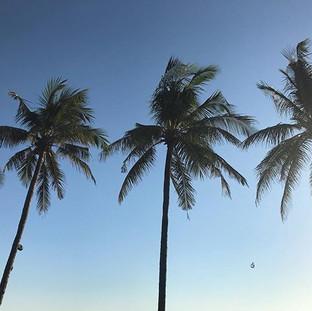 Palm tree heaven 🌴_._._._.jpg