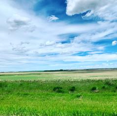 More Prairie Art