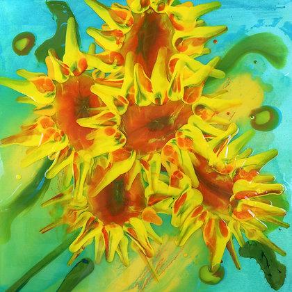 Solar Blossoms 2 (ACC#14)
