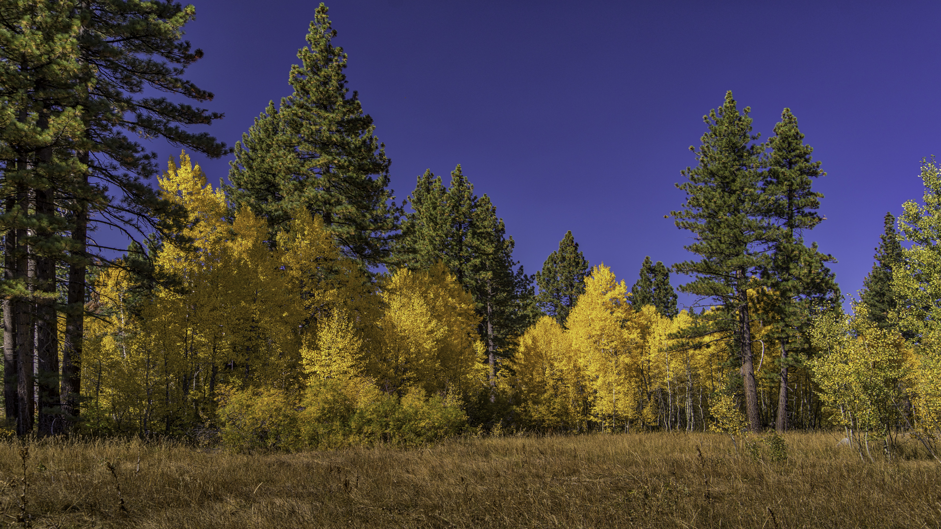 Tahoe Fall Color1