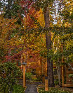 Incline Village Fall Color11