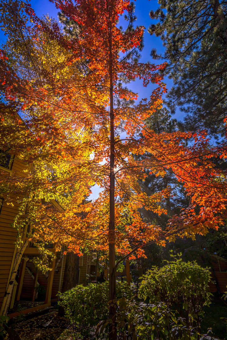 Incline Village Fall Color5