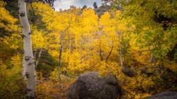 Rock Creek Fall Color5