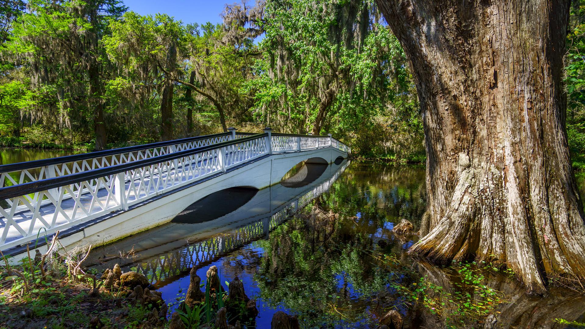 Swamp2a