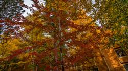 Incline Village Fall Color8