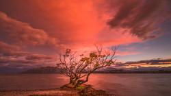 Wanaka Sunrise10