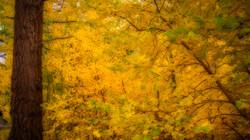 Rock Creek Fall Color11