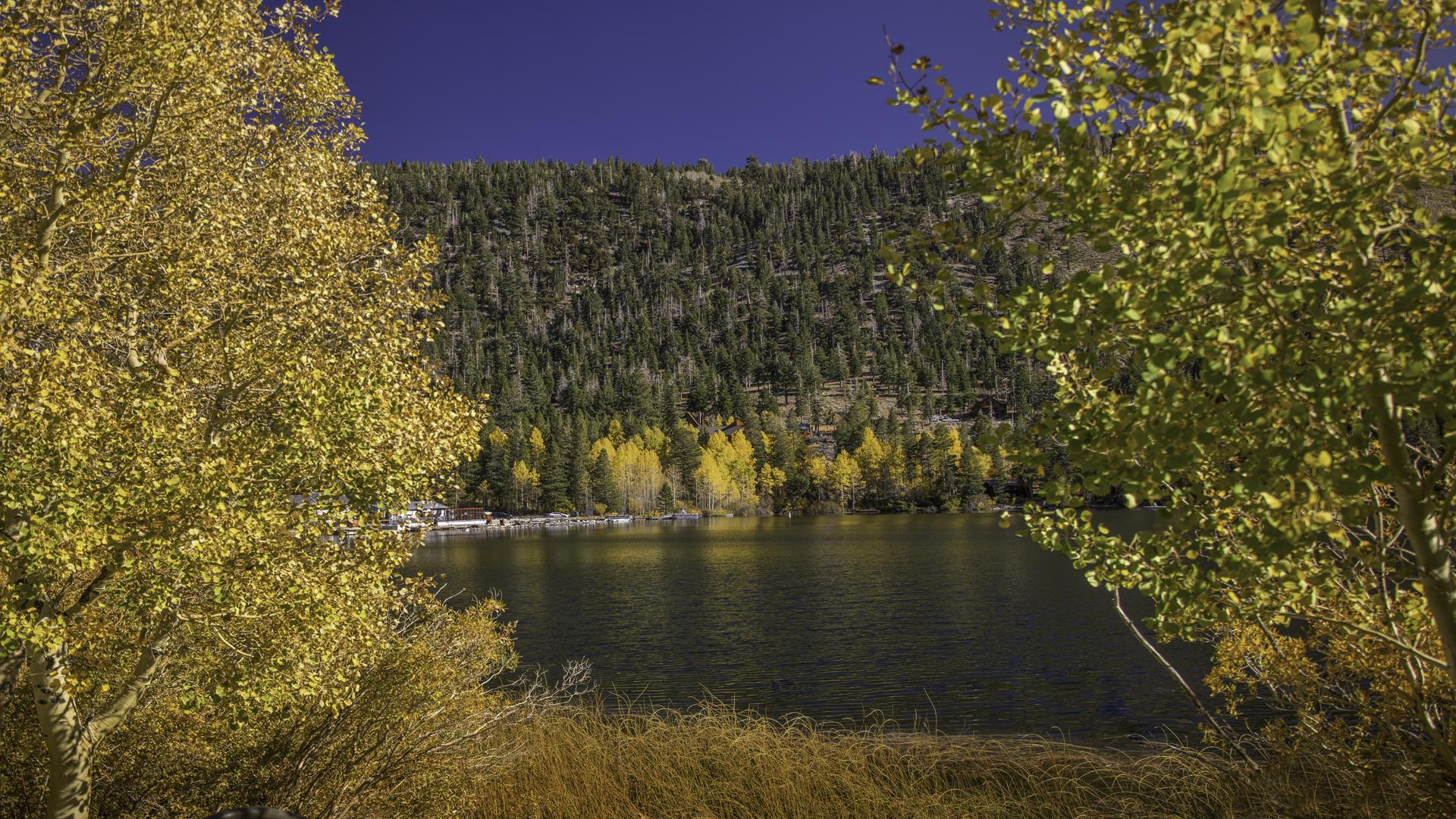 June Lake Fall Color7