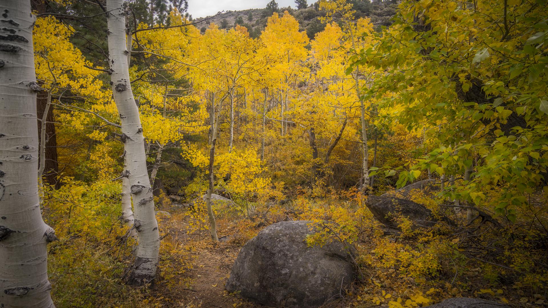 Rock Creek Fall Color6