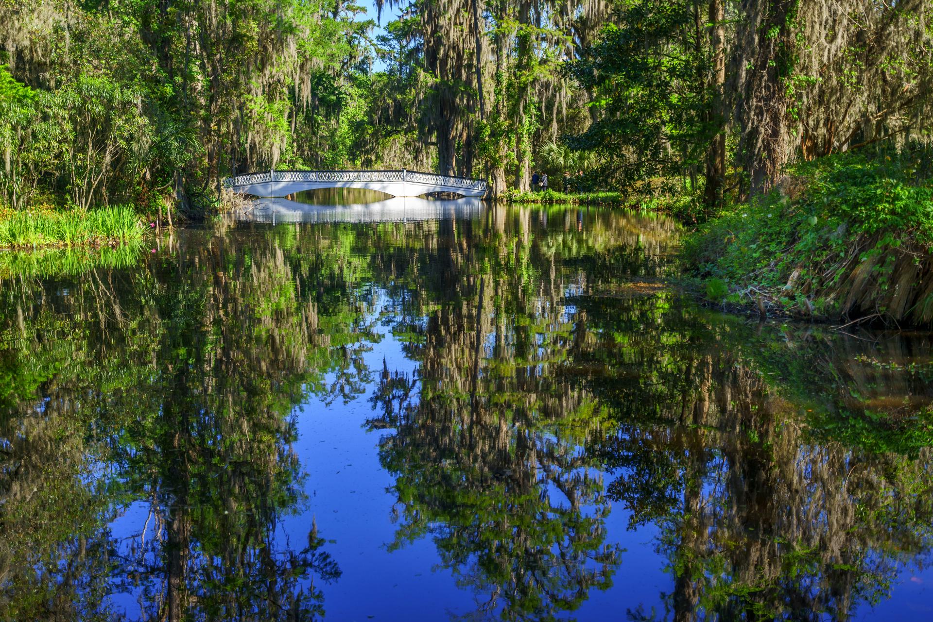 Swamp12a