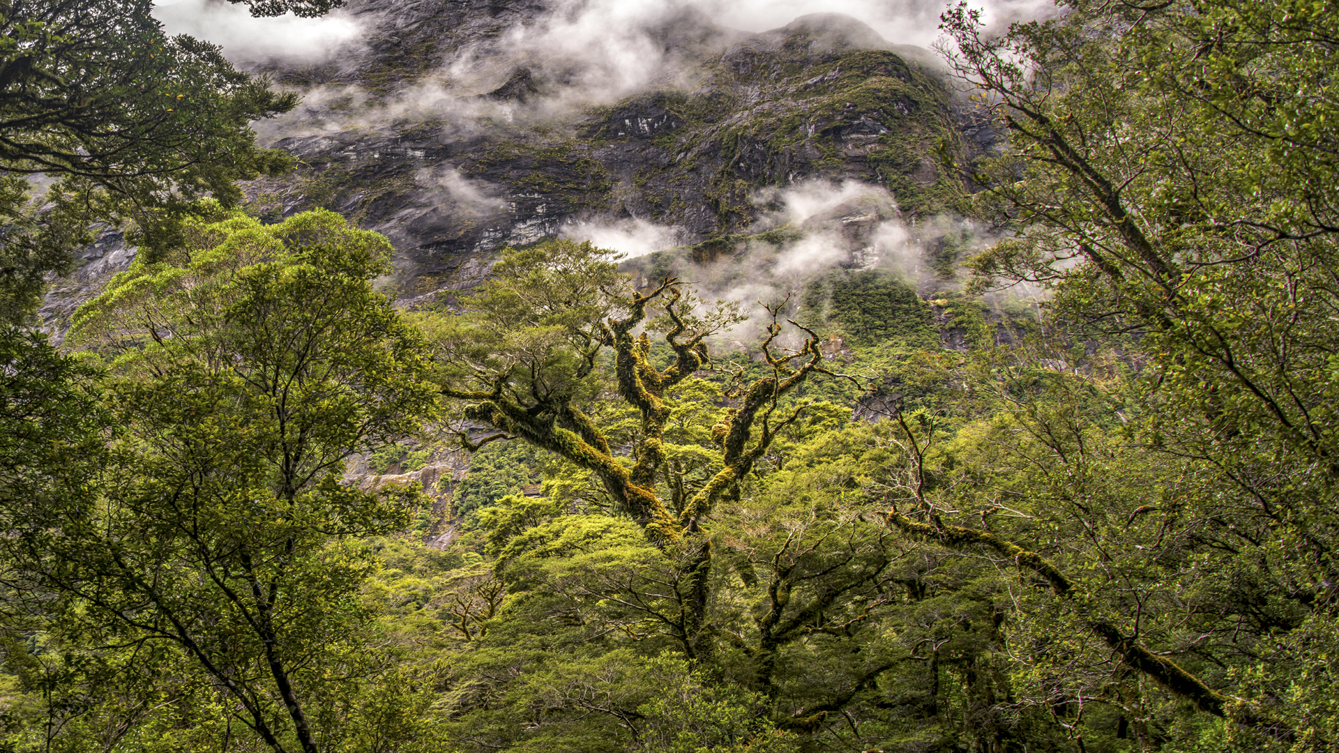 Rain Forest13