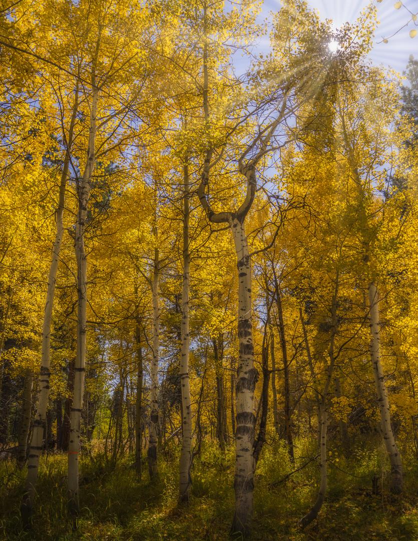 Fallen Leaf Lake Fall Color2