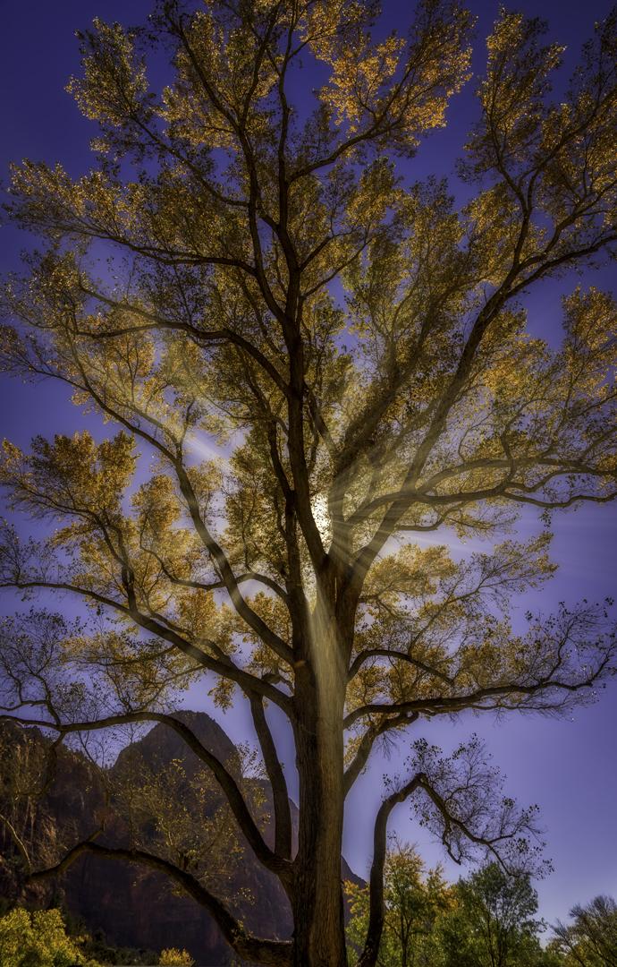 TreesSunrays2