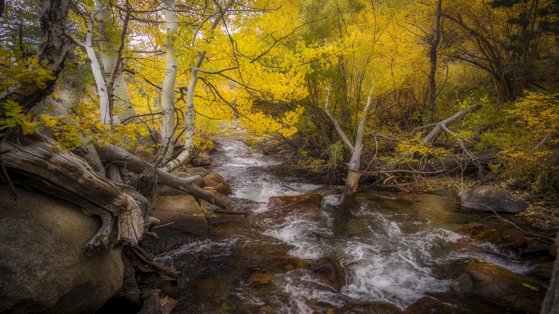 Rock Creek Fall Color19