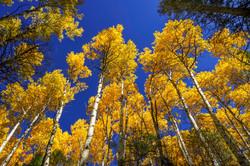 Autumn in Taos1