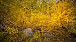Rock Creek Fall Color4