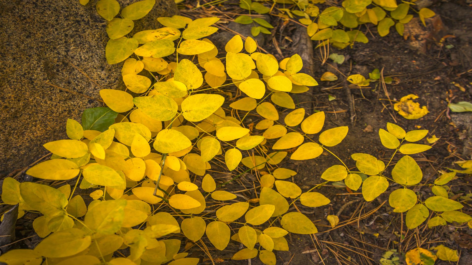 Rock Creek Fall Color17