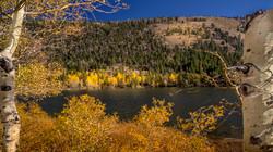 June Lake Fall Color4