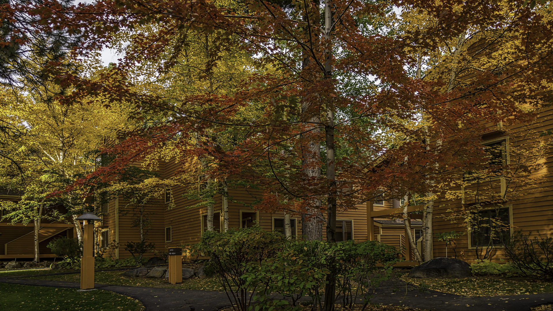 Incline Village Fall Color9