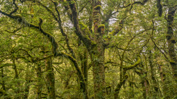 Rain Forest3