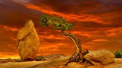JoshuaTree Juniper Sunset1