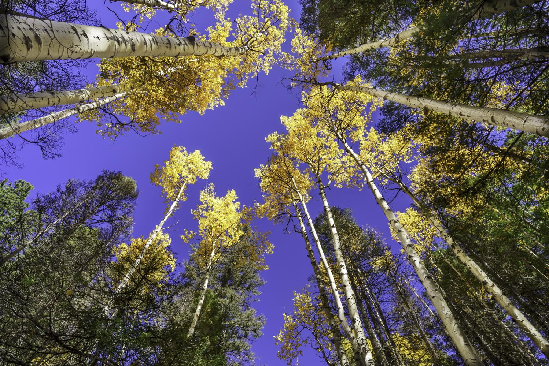 Autumn in Taos7