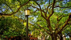 Savannah26a