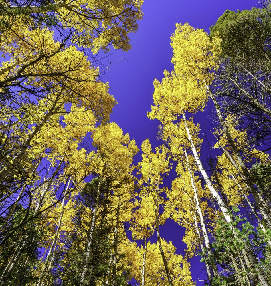 Autumn in Taos4