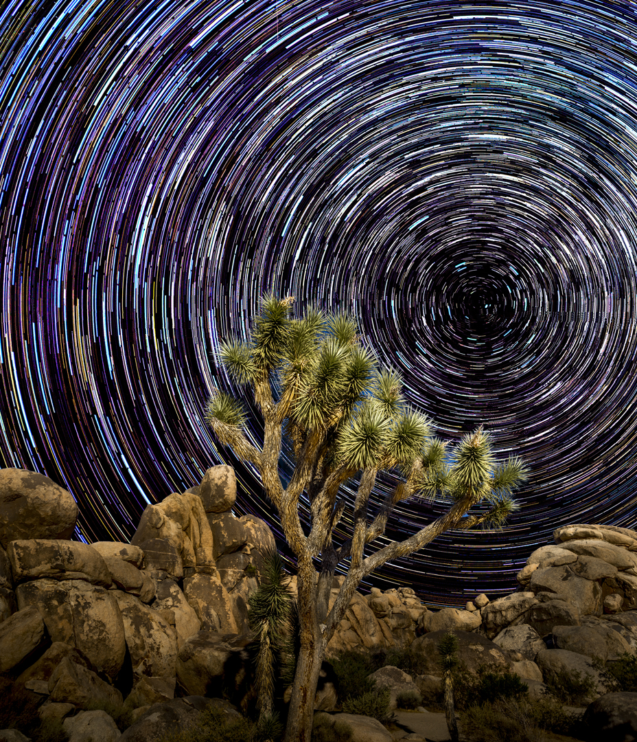 Star Trails Joshua Tree1