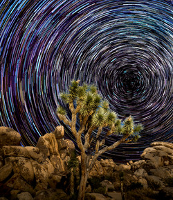 Star Trails Joshua Tree1