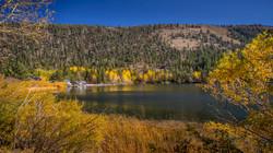 June Lake Fall Color3