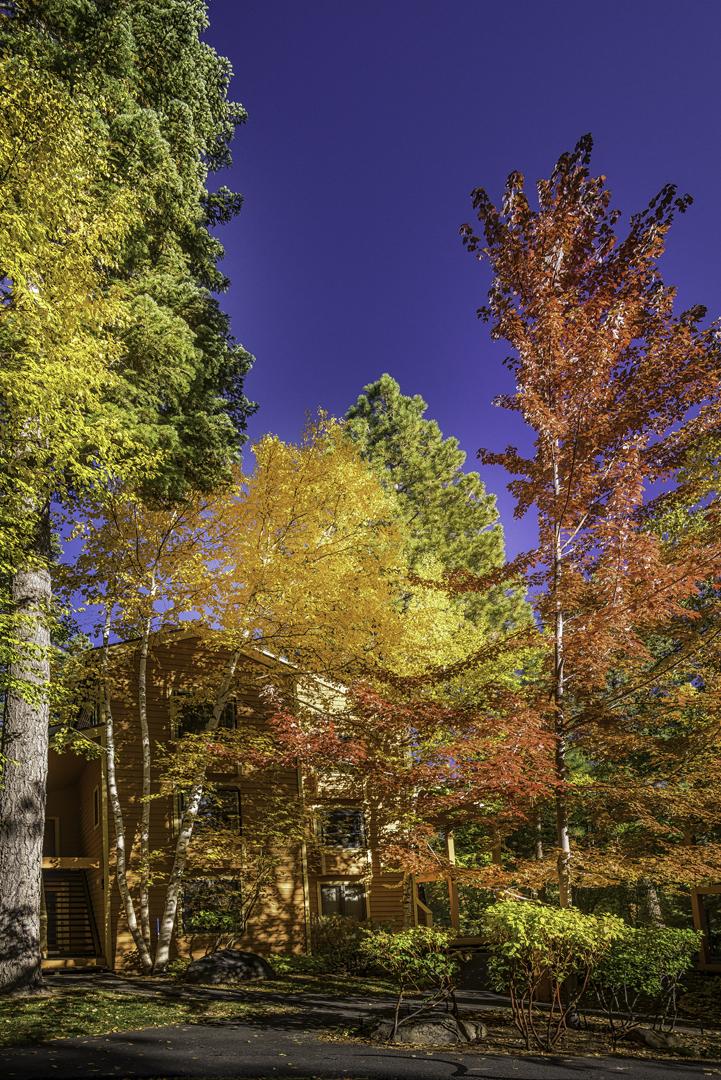 Incline Village Fall Color1