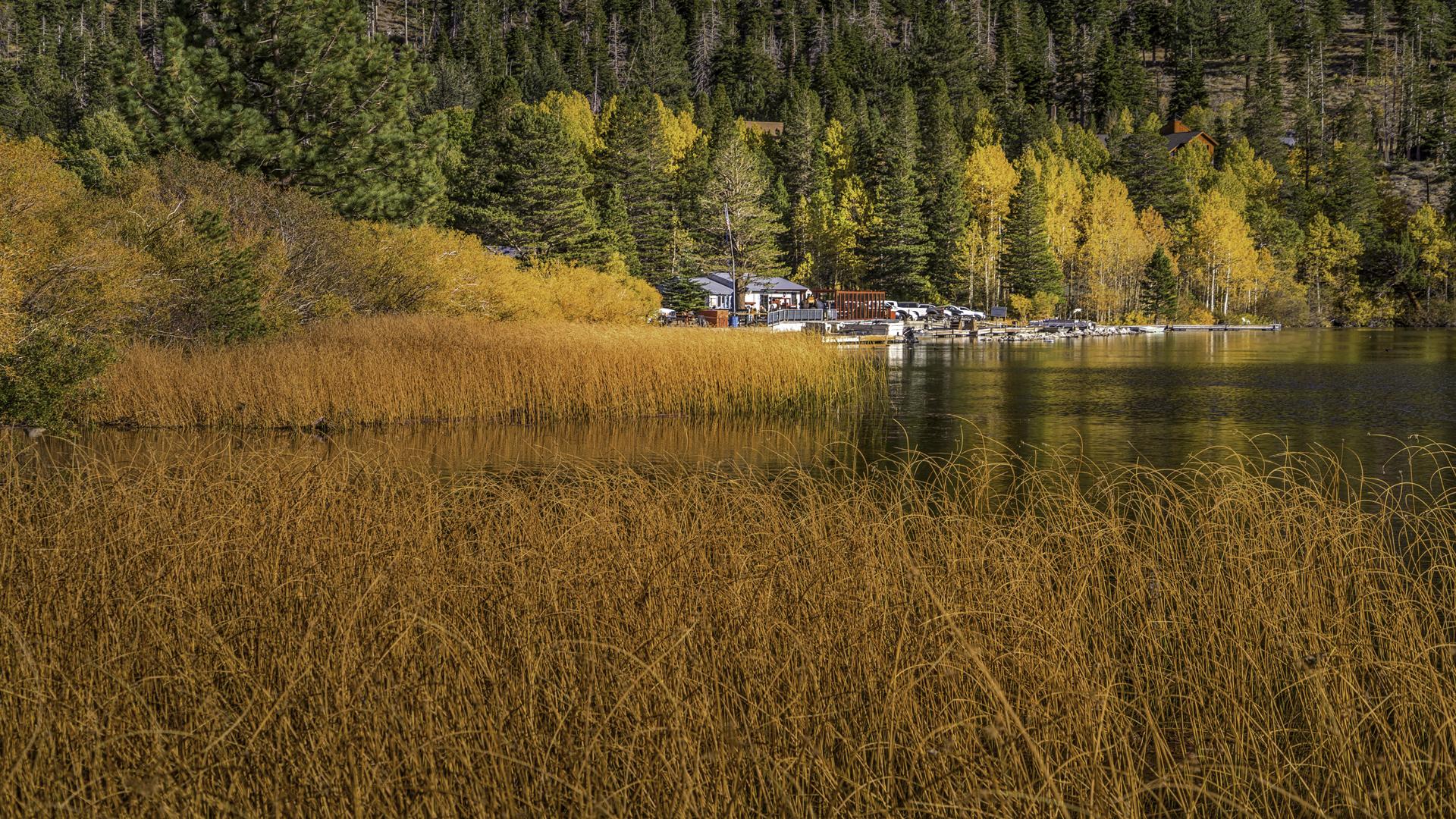 June Lake Fall Color8