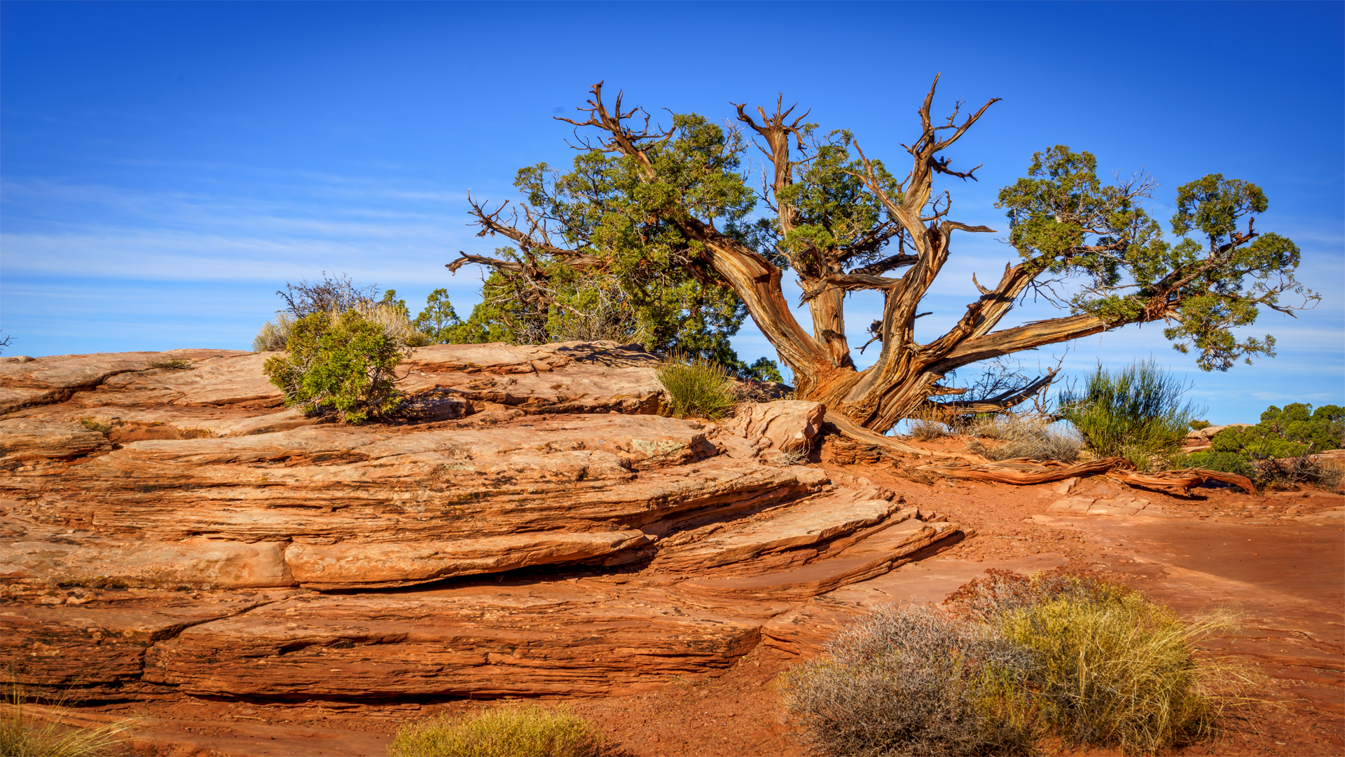 Tree5, Canyonlands Nat'l Park