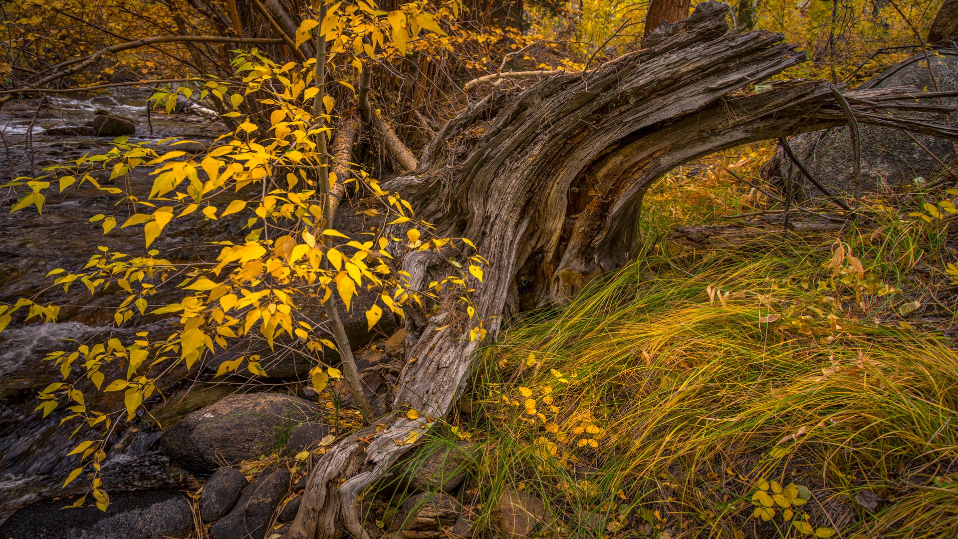Rock Creek Fall Color2
