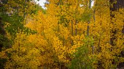 Rock Creek Fall Color14