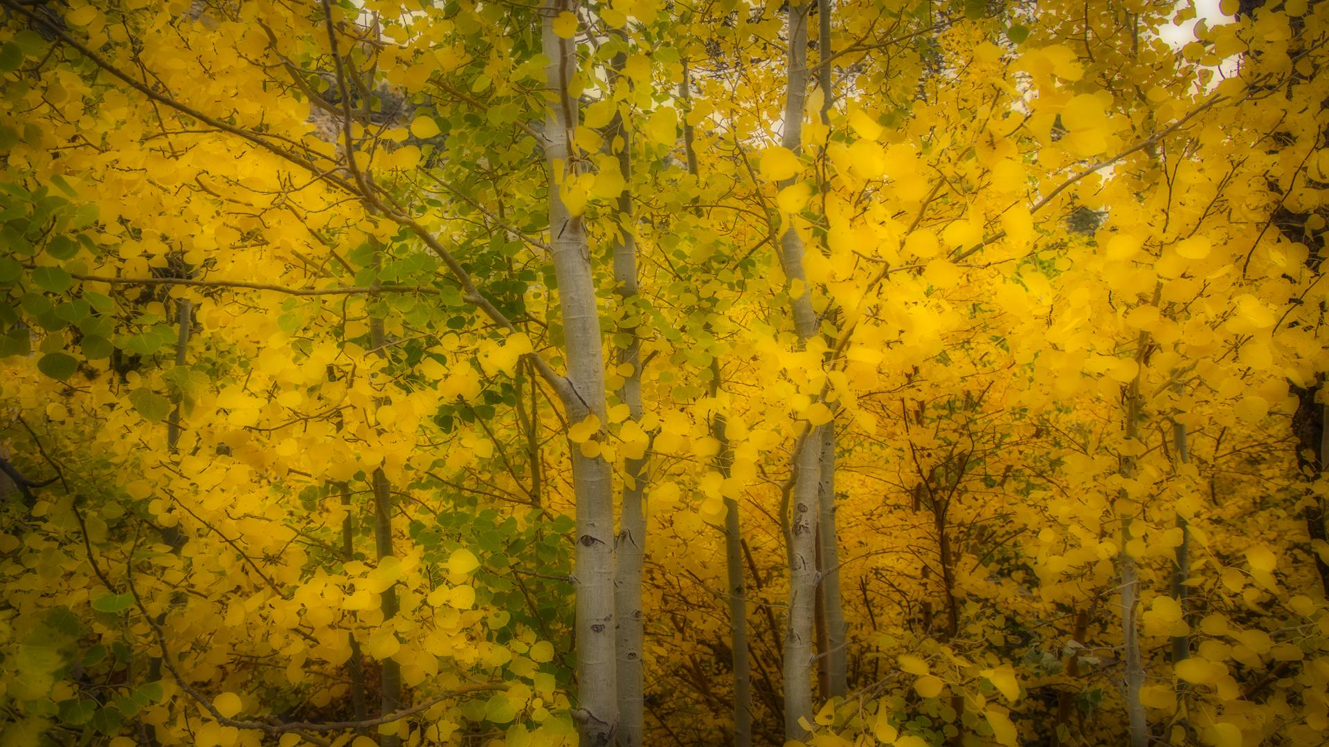 Rock Creek Fall Color13