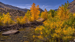 Walker Creek Fall Color1